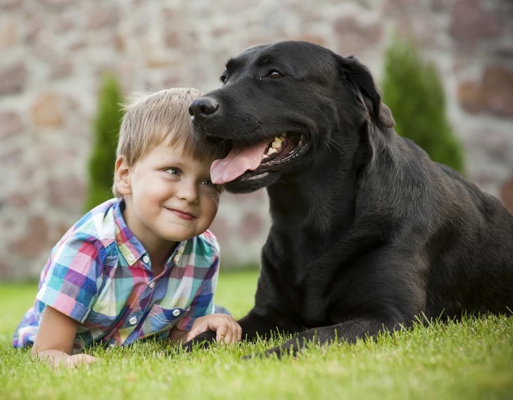 Beliebtester Hund