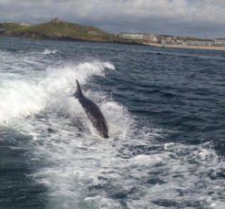 Dolphin spotted on Cornwall boat trip
